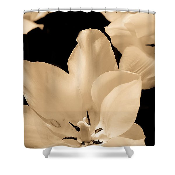 Soft Petals Shower Curtain