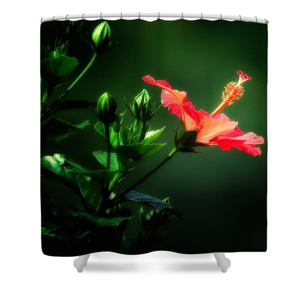Soft Red Hibiscus Plant Shower Curtain