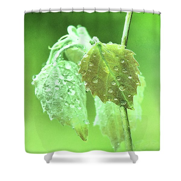 Soft Spring Rains Shower Curtain