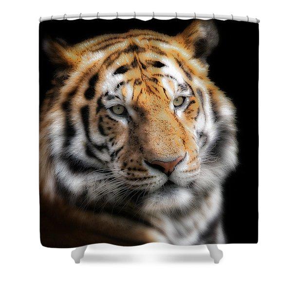 Soft Tiger Portrait Shower Curtain