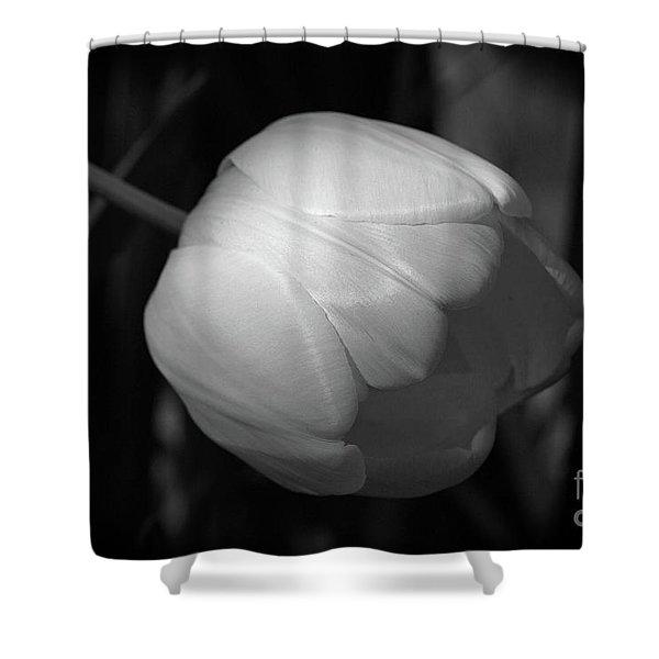 Softly Shower Curtain