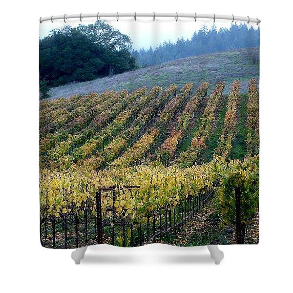 Sonoma County Vineyards Near Healdsburg Shower Curtain