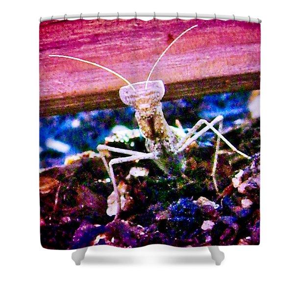 Sonoran Desert Ground Mantis Shower Curtain