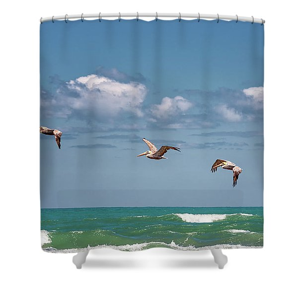 South Padre Island Pelicans Shower Curtain