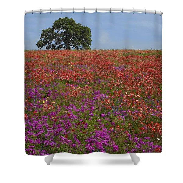 South Texas Bloom Shower Curtain