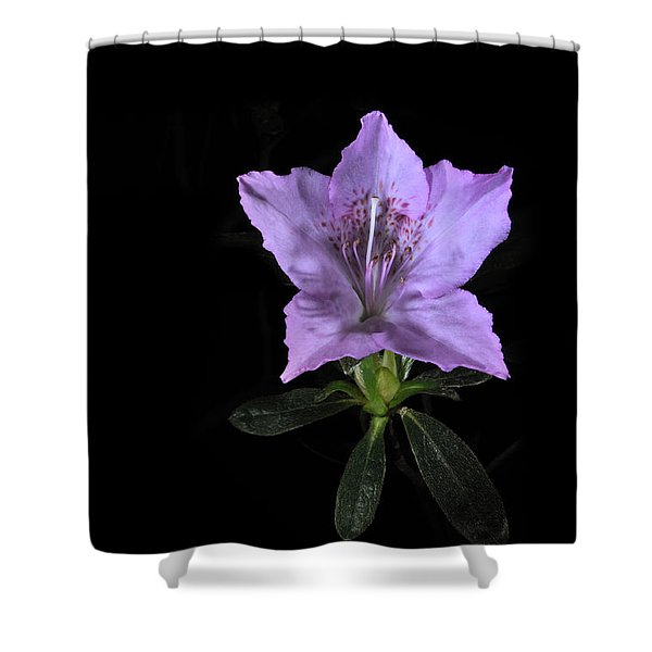 Southern Indica Azalea 2 Shower Curtain