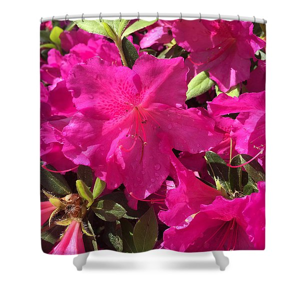 Southern Pink Shower Curtain