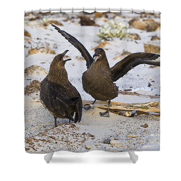 Southern Skuas Shower Curtain