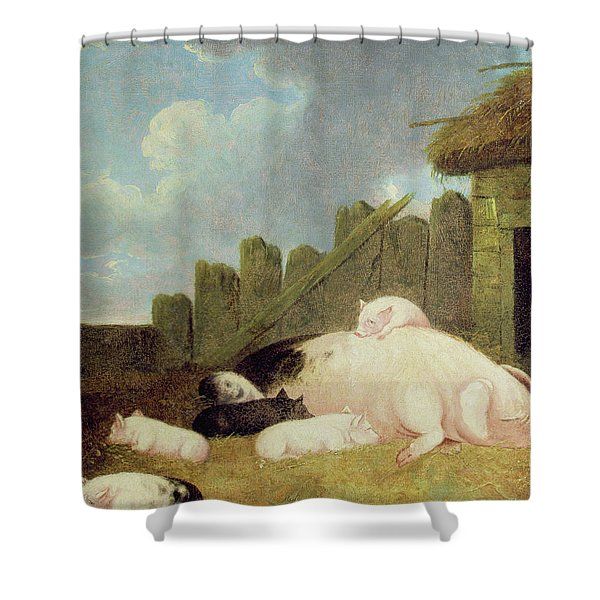 Sow With Piglets In The Sty  Shower Curtain