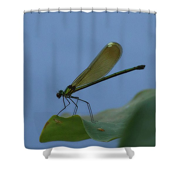 Sparkling Jewelwing #2 Shower Curtain