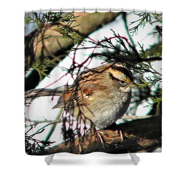 Sparrow In The Snow Shower Curtain