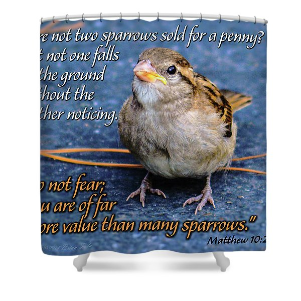 Sparrow Scripture Matthew 10 Shower Curtain