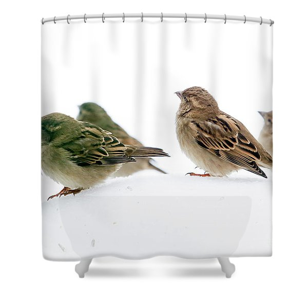 Sparrows In The Snow Shower Curtain