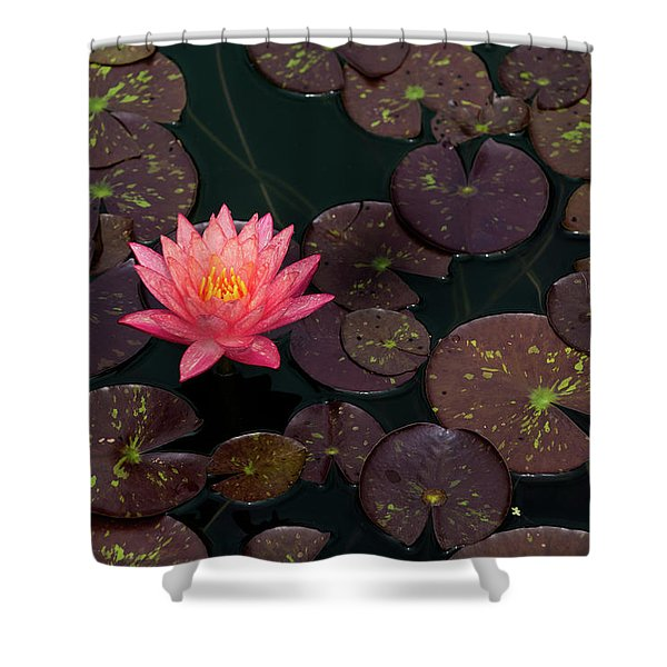 Speckled Red Lily And Pads Shower Curtain