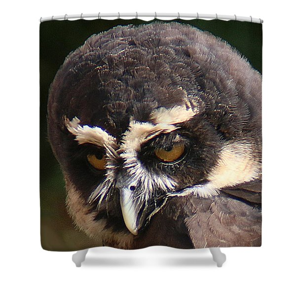Shower Curtain featuring the photograph Spectacled Owl Portrait 2 by William Selander