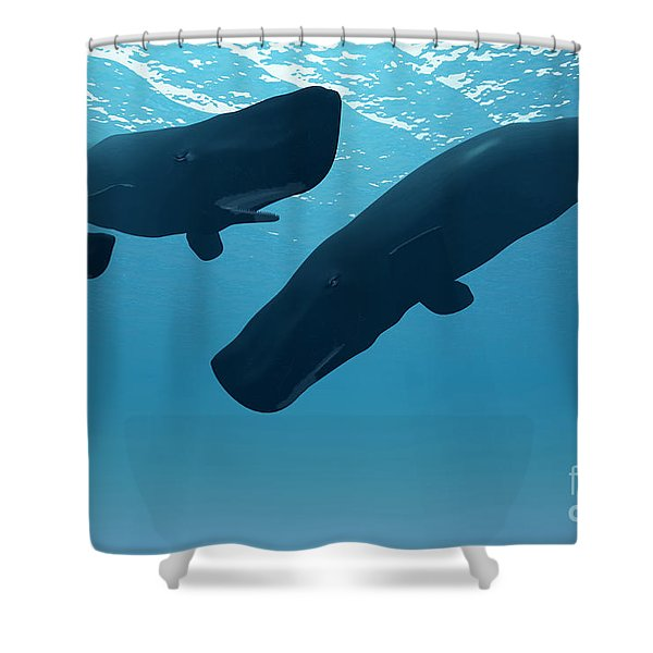 Sperm Whale Encounter Shower Curtain
