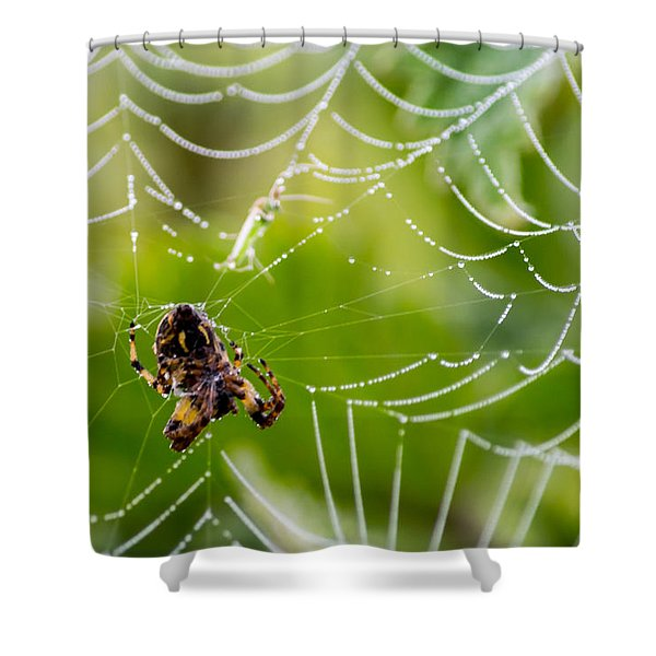 Spider And Spider Web With Dew Drops 05 Shower Curtain