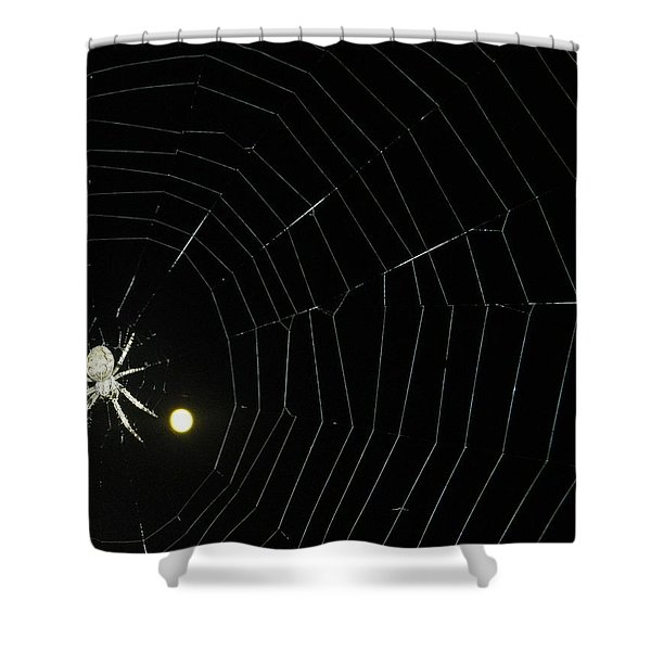 Spider Moon Shower Curtain