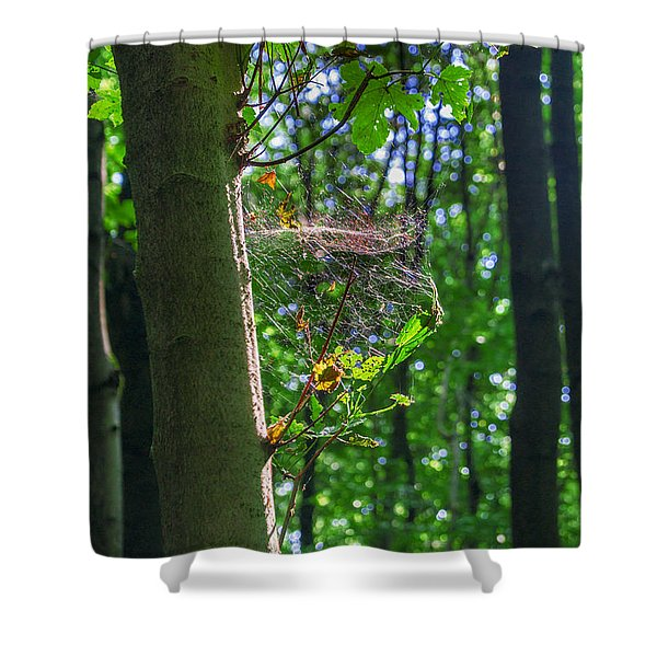 Spider Web In A Forest Shower Curtain