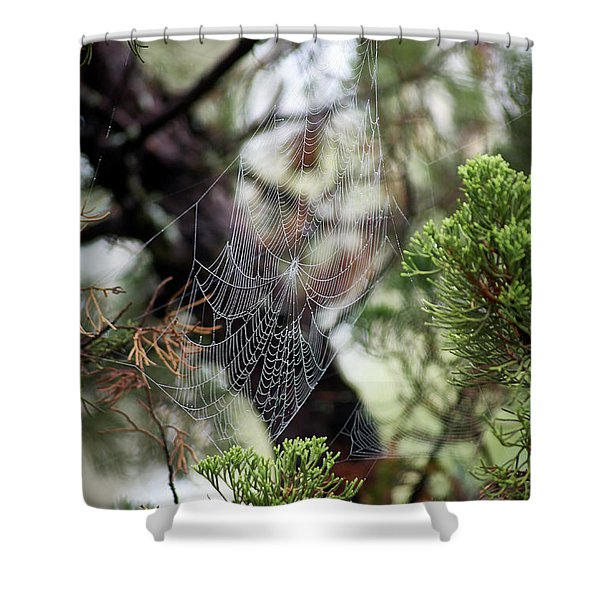 Spider Web In Tree Shower Curtain