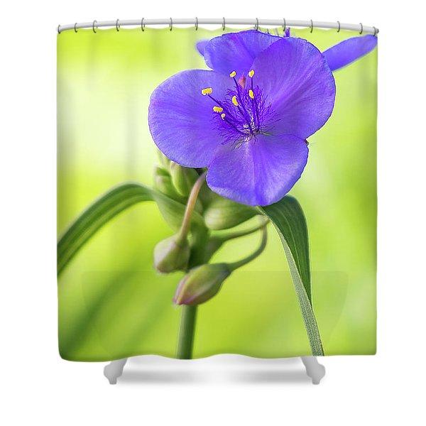 Spiderwort Wildflower Shower Curtain