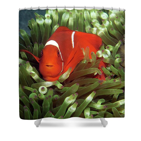 Spinecheek Anemonefish, Indonesia 2 Shower Curtain