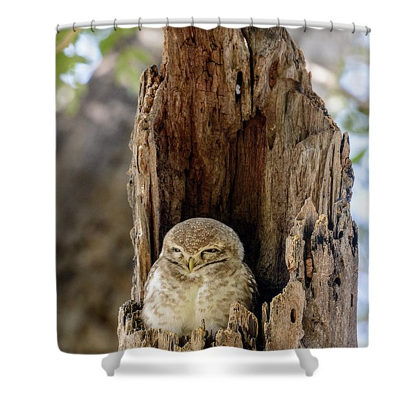 Spotted Owlet Shower Curtain