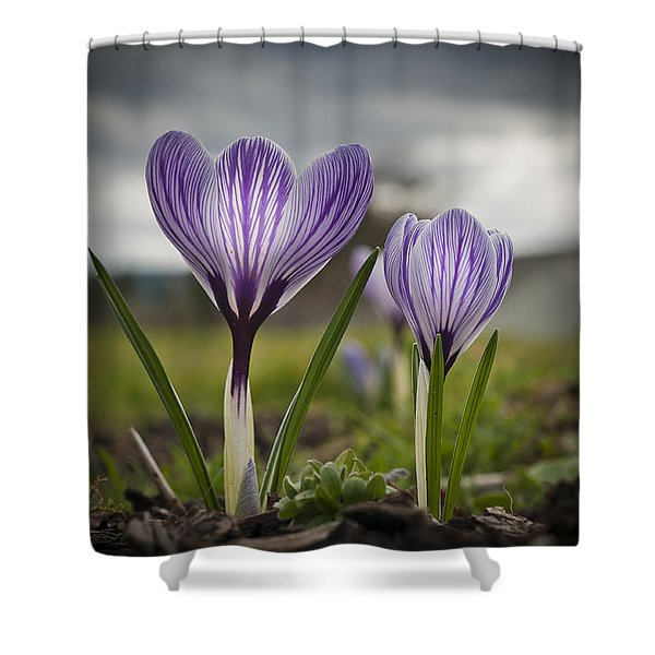 Spring Awakening Shower Curtain
