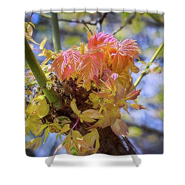 Spring Box Elder Shower Curtain