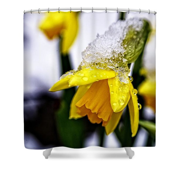 Spring Daffodil Flowers In Snow Shower Curtain