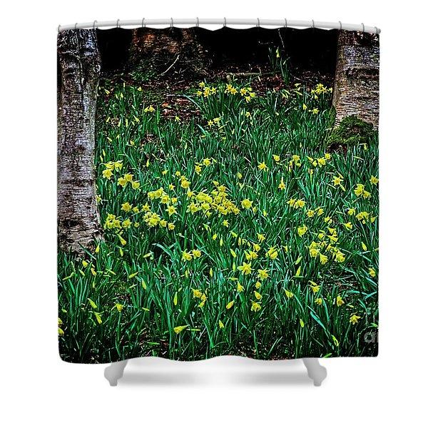 Spring Daffoldils Shower Curtain