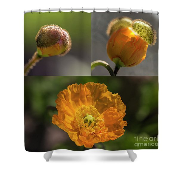 Spring First Shower Curtain