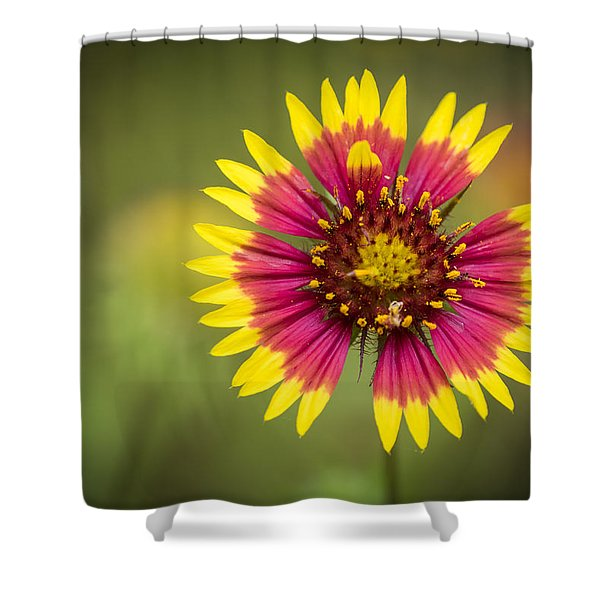 Spring Indian Blanket Shower Curtain