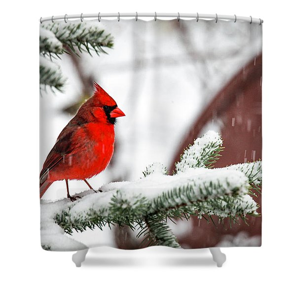 Spring Recess Shower Curtain