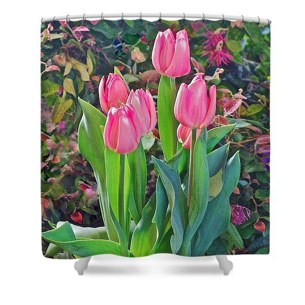 Spring Show 14 Pink Tulips  Shower Curtain