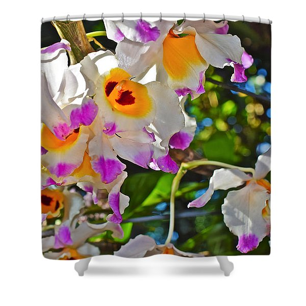Spring Show 15 Brazilian Orchid Shower Curtain