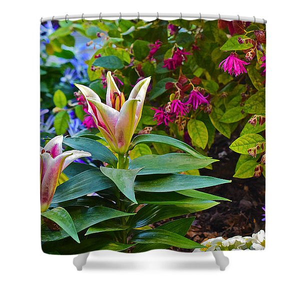 Spring Show 15 Lilies Shower Curtain