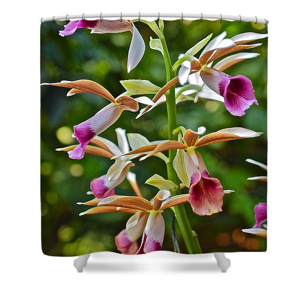 Spring Show 15 Nun's Orchid 1 Shower Curtain
