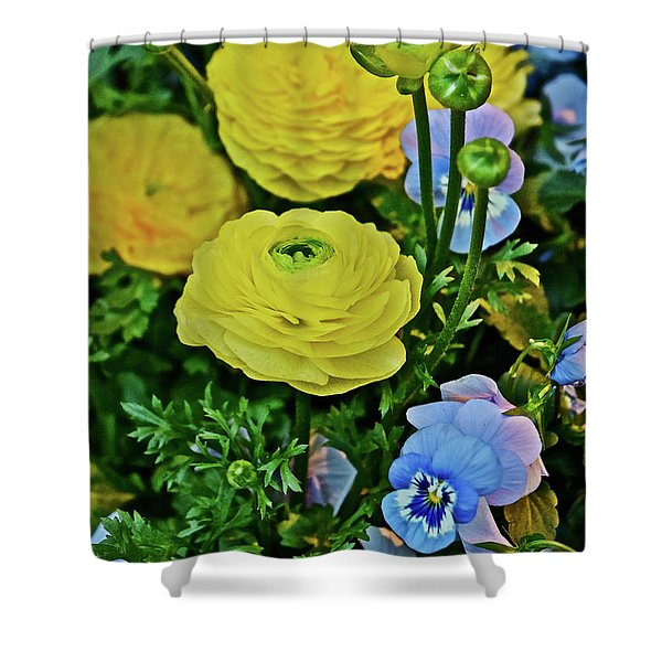 Spring Show 18 Persian Buttercup With Horned Viola Shower Curtain