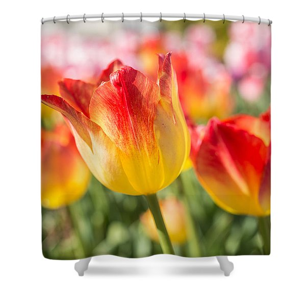 Spring Touches My Soul Shower Curtain