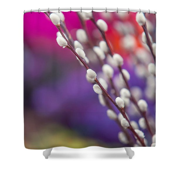 Spring Willow Branch Of White Furry Catkins Shower Curtain