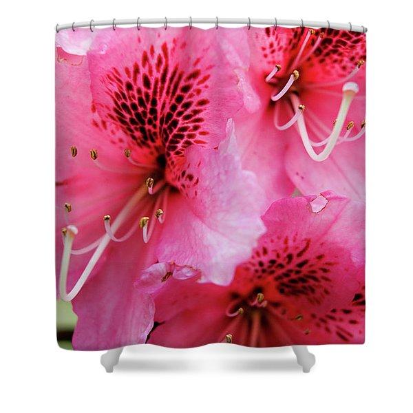 Springtime Azalea Shower Curtain