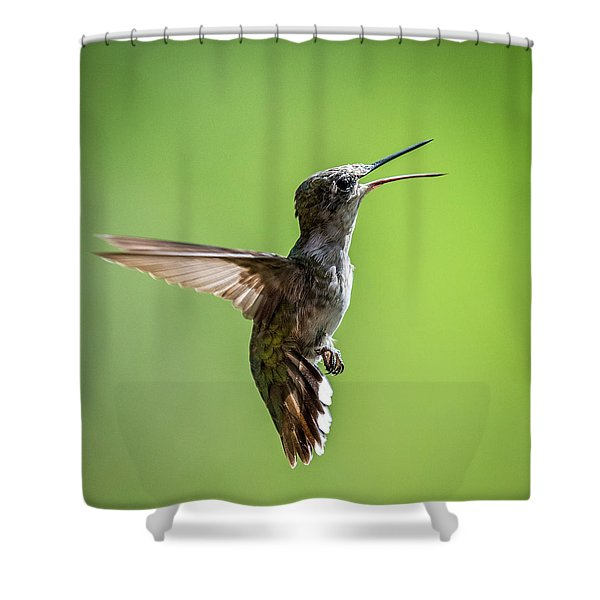 Squawking Humming Bird Shower Curtain