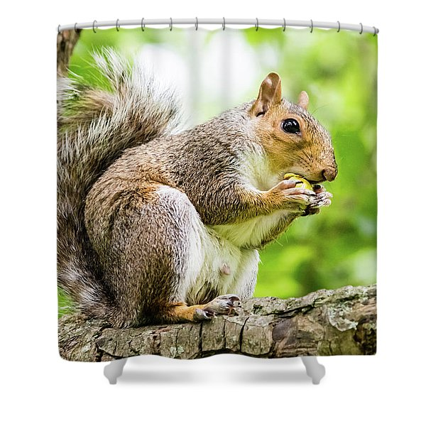 Squirrel Eating On A Branch Shower Curtain