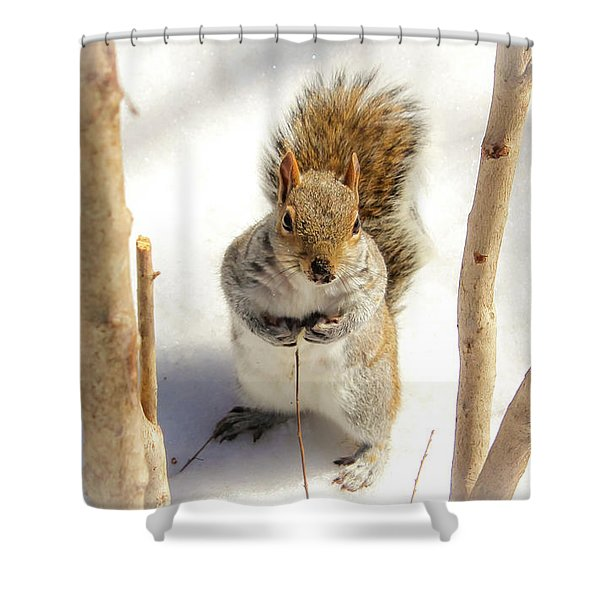 Squirrel In Snow Shower Curtain