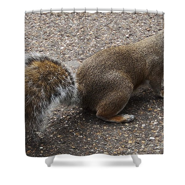 Squirrel Side Shower Curtain