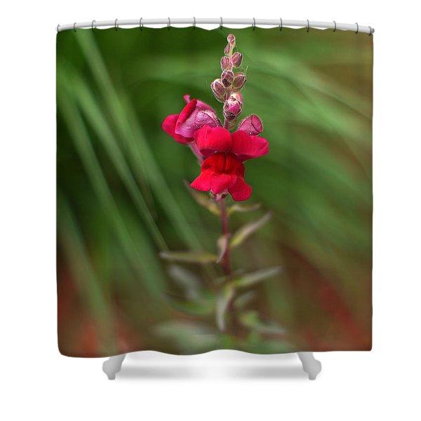 St. Johns Park Flower 872 Shower Curtain