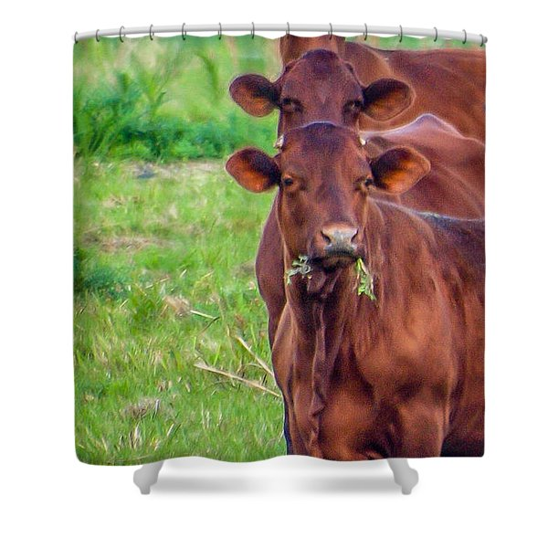 Shower Curtain featuring the photograph Stacked Up Cows          by Tom Claud