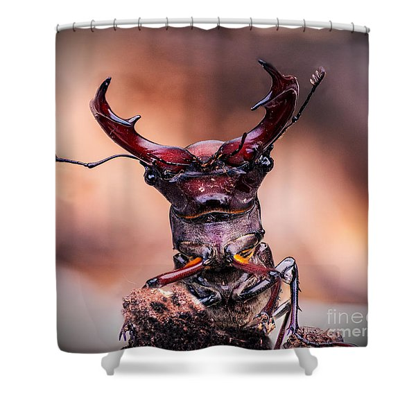 Stag Beetle Stare Down Shower Curtain