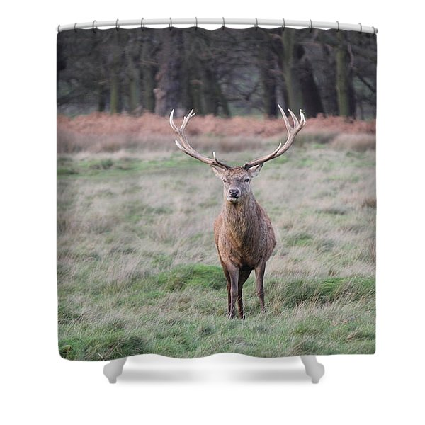 Stag In Richmond Park Shower Curtain